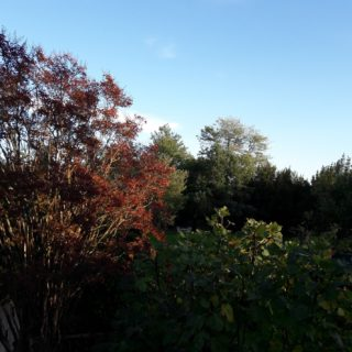 Garden in autumn with trees with red leaves