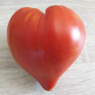 Tomato with heart shape from the bed and breakfast's garden