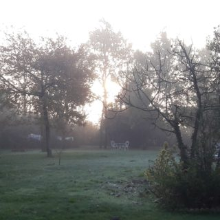 Guest house garden on a misty morning