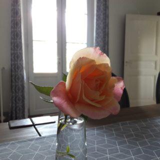 Rose ancienne du jardin dans un vase dans la salle à manger